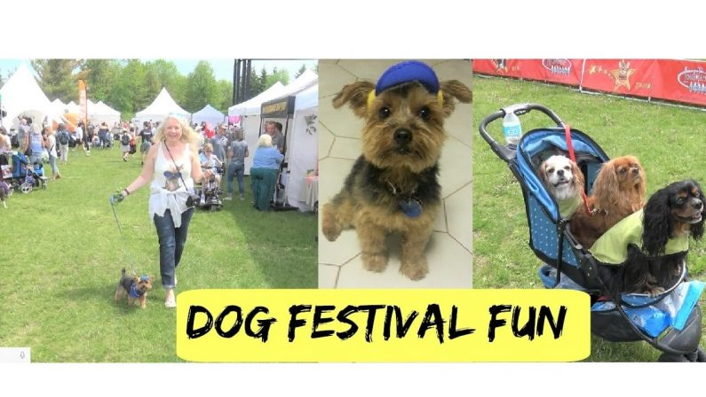 Our Little Yorkie Visits a Dog Festival