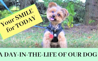 A Day in Our Dog's Life (Today's Smile for You)