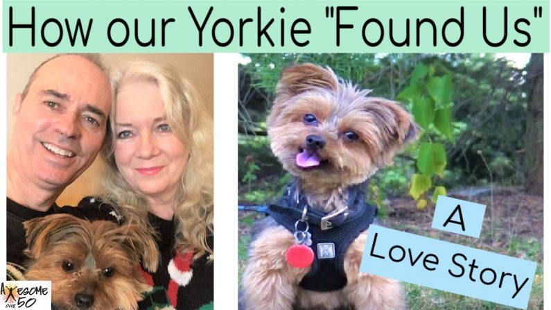 "How our Yorkie ""Found Us"""
