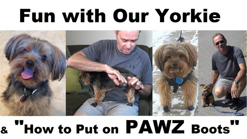 Having Fun with Our Yorkie & Protecting His Paws