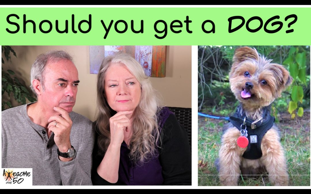 Should You Get a Dog over 50? …Considerations
